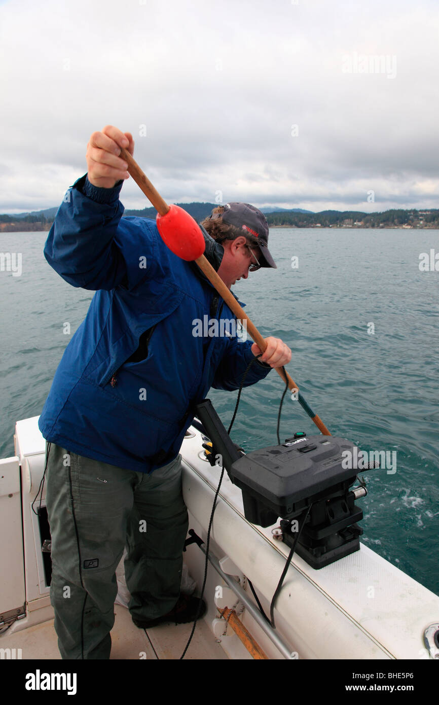 harpooning halibut Stock Photo