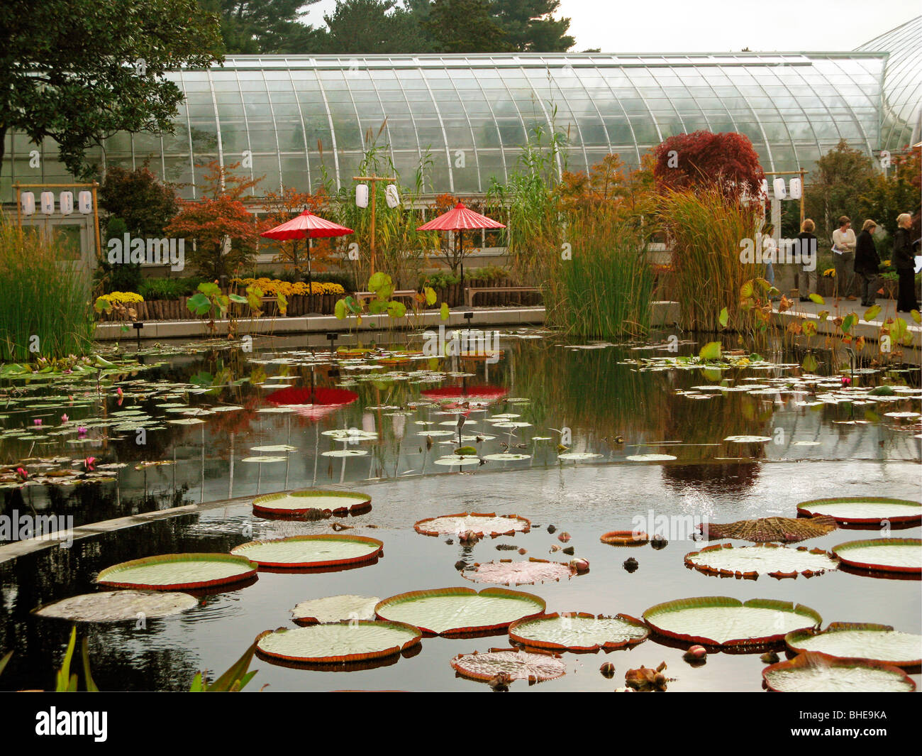 New York Botanical Garden lily pond reflection Stock Photo: 27974446 ...