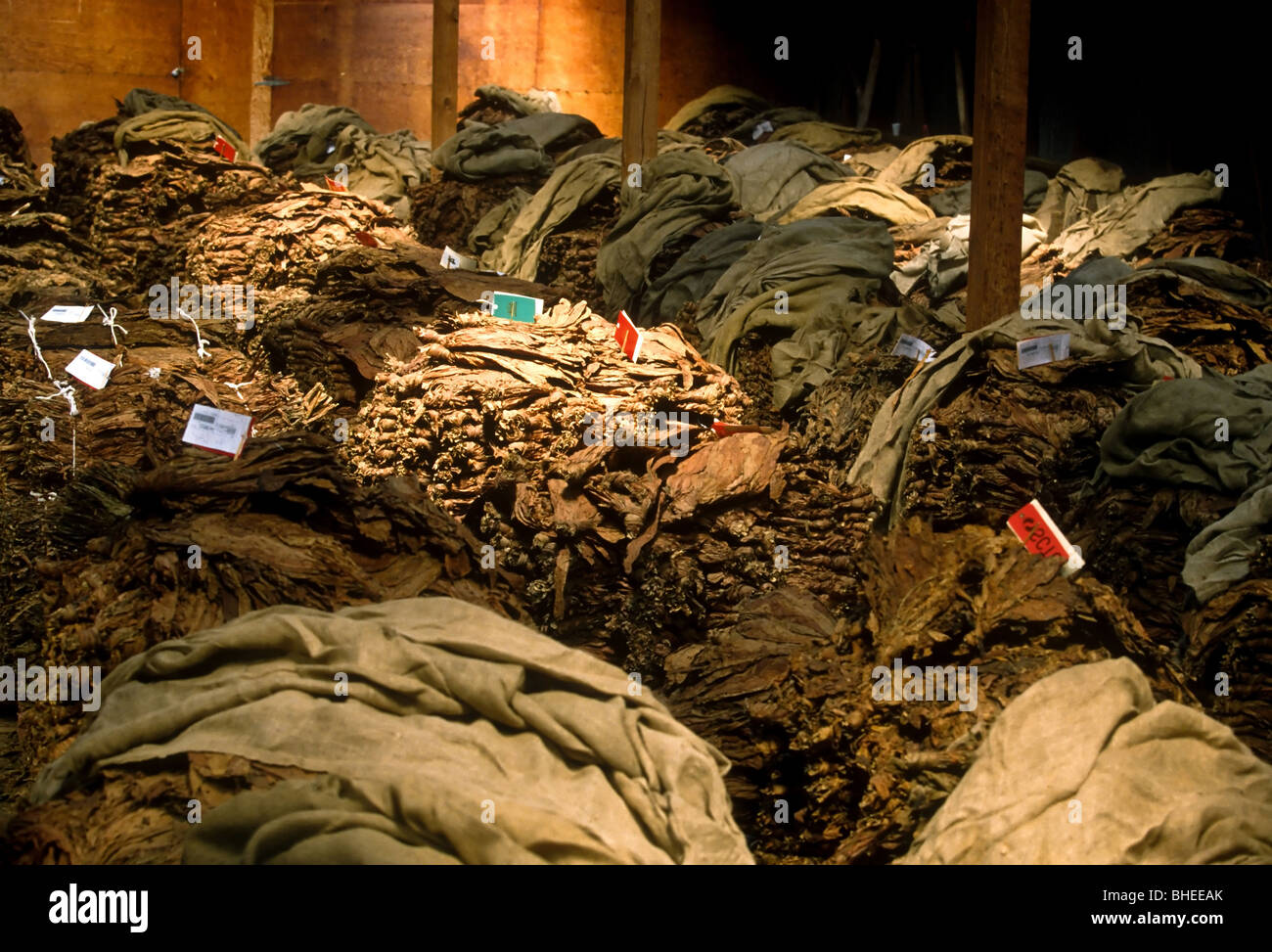 Stacks of dried tobacco awaits the auction block at the Hughesville, MD annual tobacco auctions in Hughesville, - Stock Image