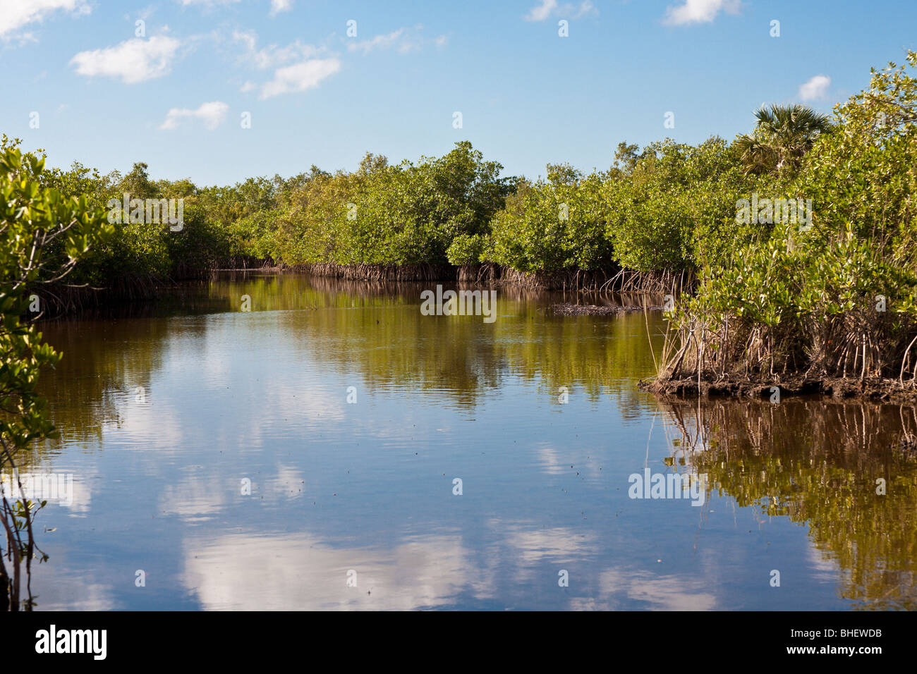 Ochopee, FL - Nov 2008 - Mangrove swamp with channels for airboat tours in the Everglades along Alligator Alley - Stock Image