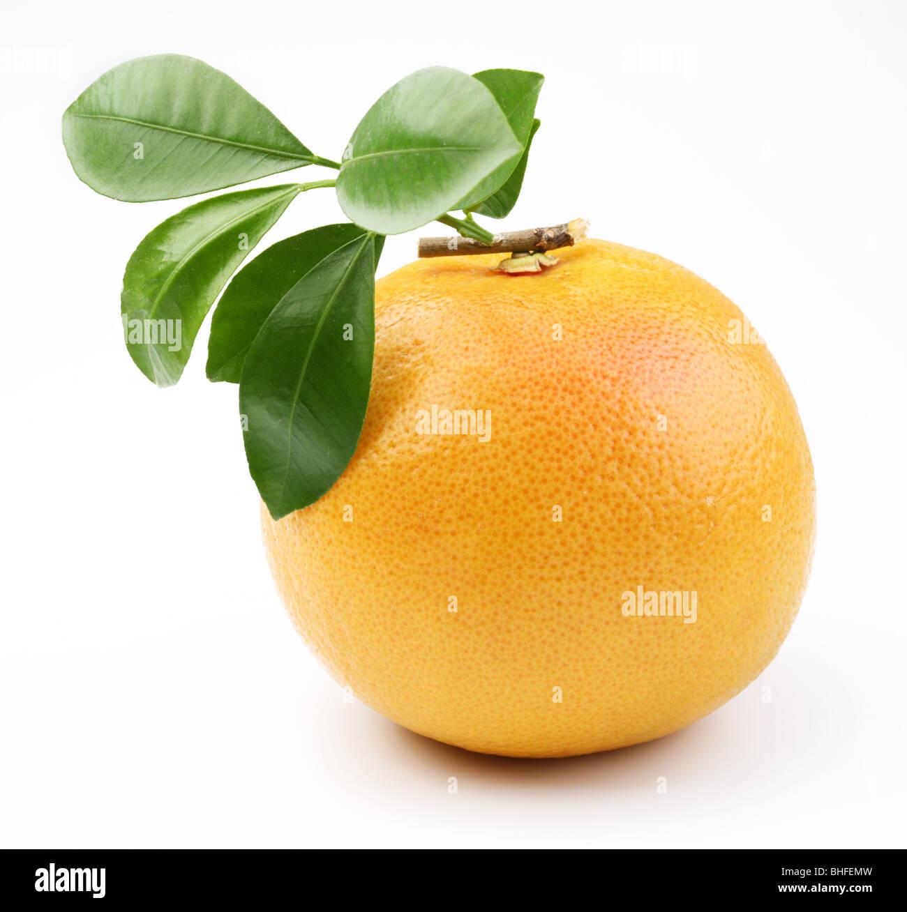 Ripe grapefruit on a white background - Stock Image