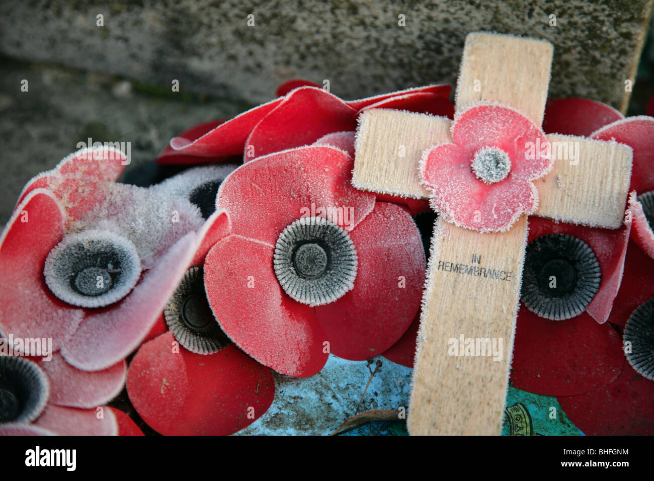 Frost and ice on Remembrance Day poppies and cross. - Stock Image