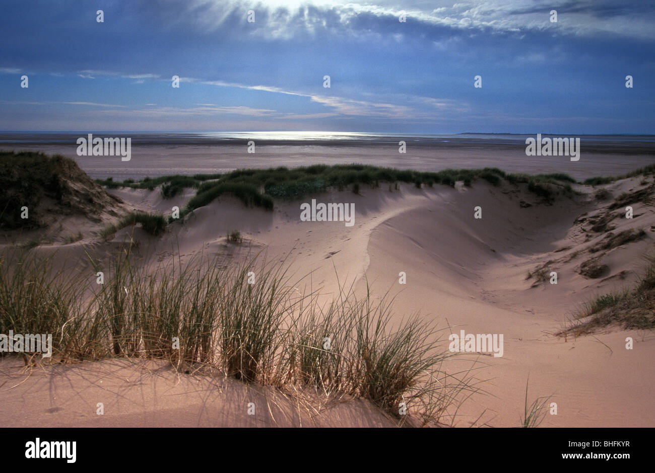 Marram grass and sand dunes at Sandscale Haws National Nature Reserve Cumbria England June 2000 - Stock Image