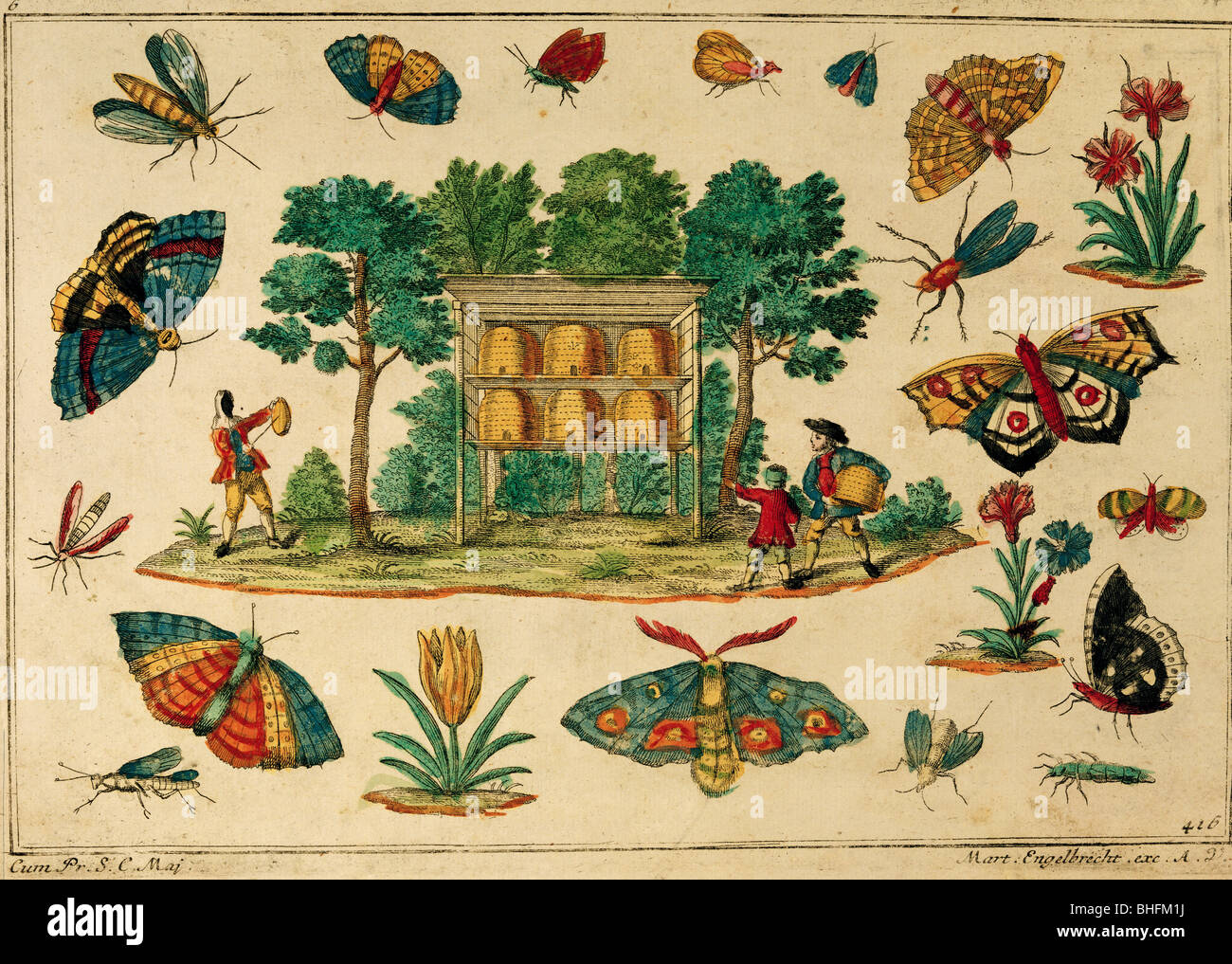 literature, children's book, illustration of beehive with insects, coloured engraving by Martin Engelbrecht, - Stock Image
