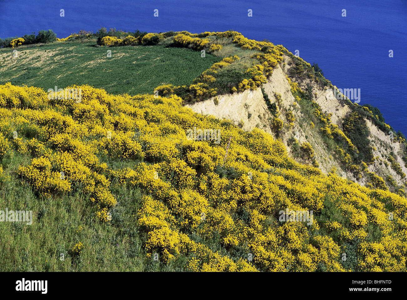 geography / travel, Italy, Marche, landscapes, Strada Panoramica, steep coast with flowering Macchia, near Fiorenzuola, - Stock Image