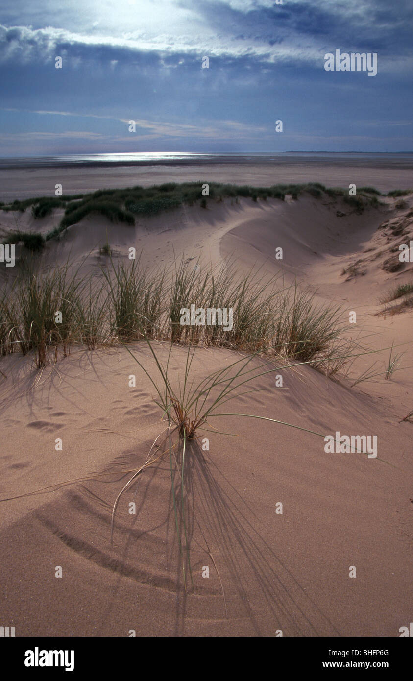 Marram grass and sand dunes on Sandscale Haws National Nature Reserve Cumbria - Stock Image