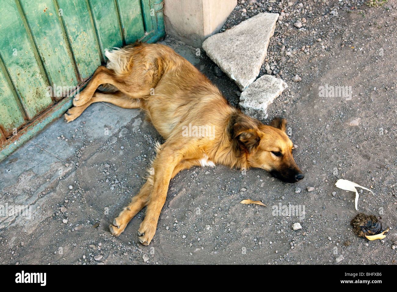 Mexican Dog Stock Photos & Mexican Dog Stock Images - Alamy