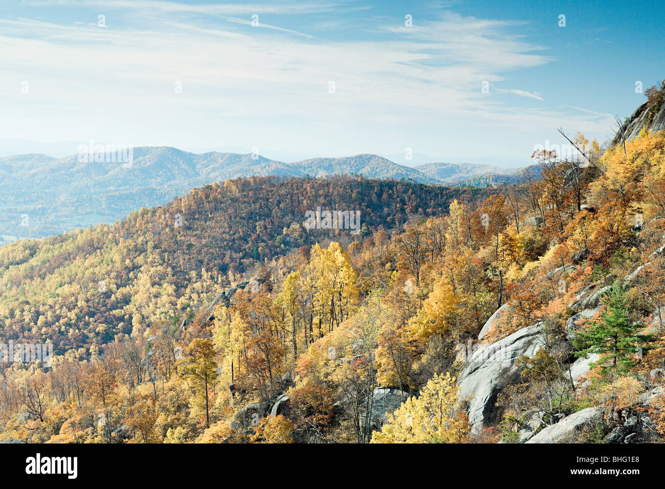 Forest in virginia - Stock Image