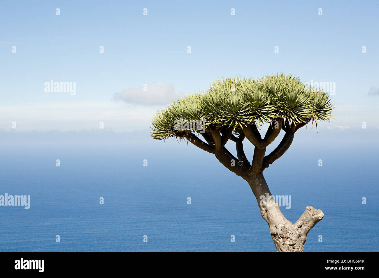 A single tree with blue sky and sea behind - Stock Image