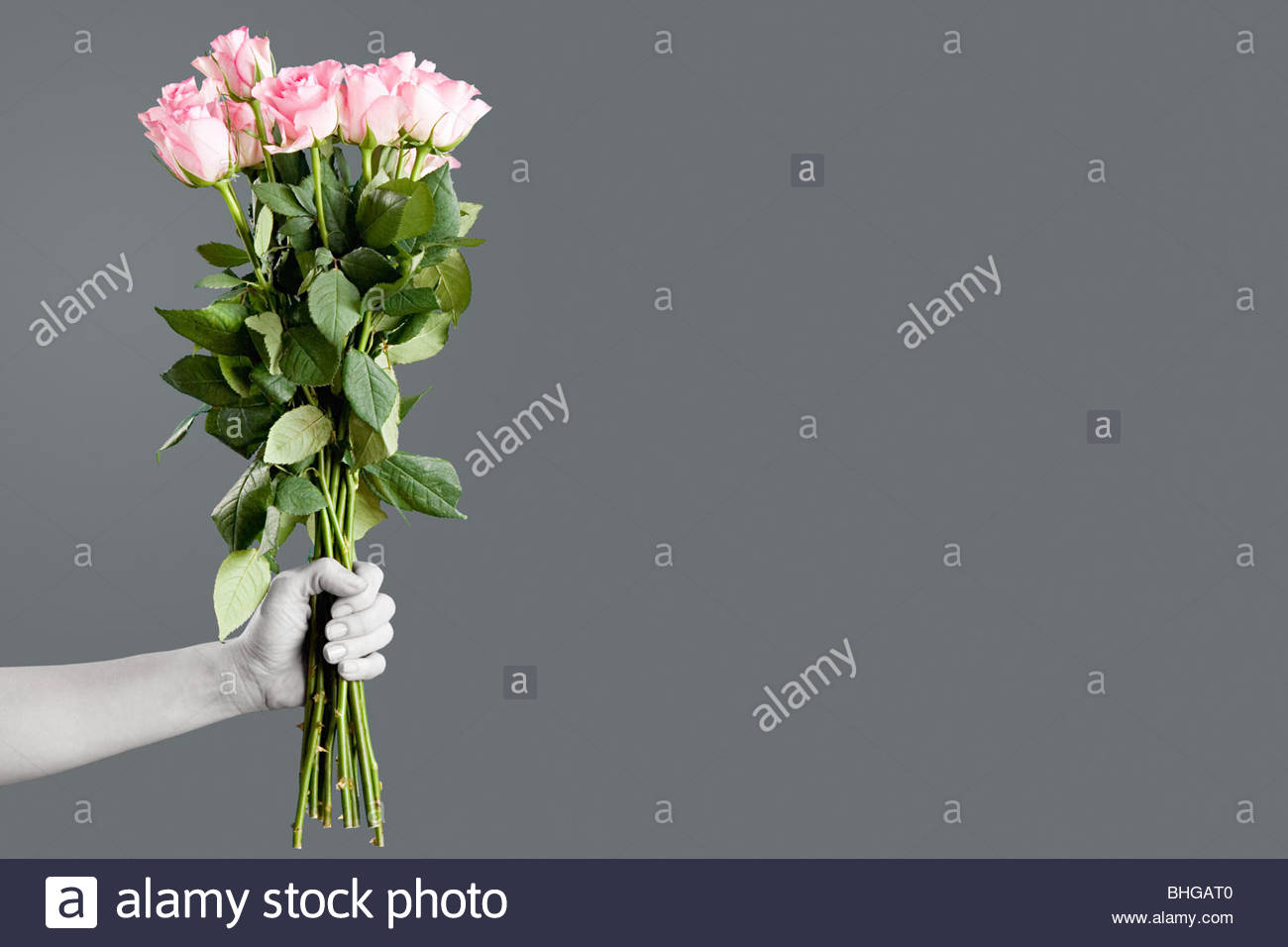 Person holding bunch of roses - Stock Image