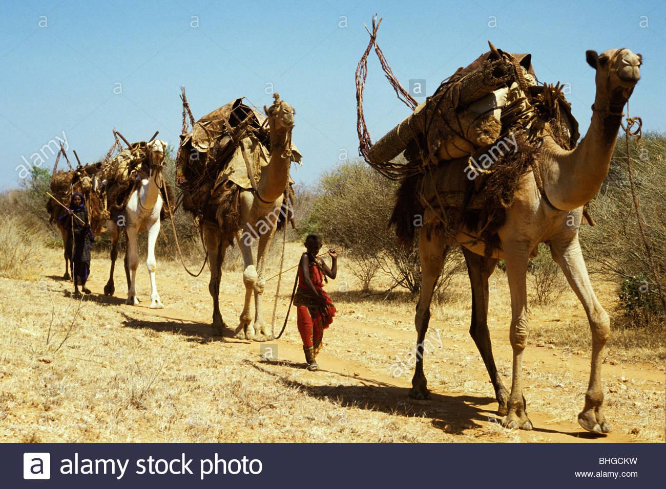 Somali Nomads Camel train - Stock Image