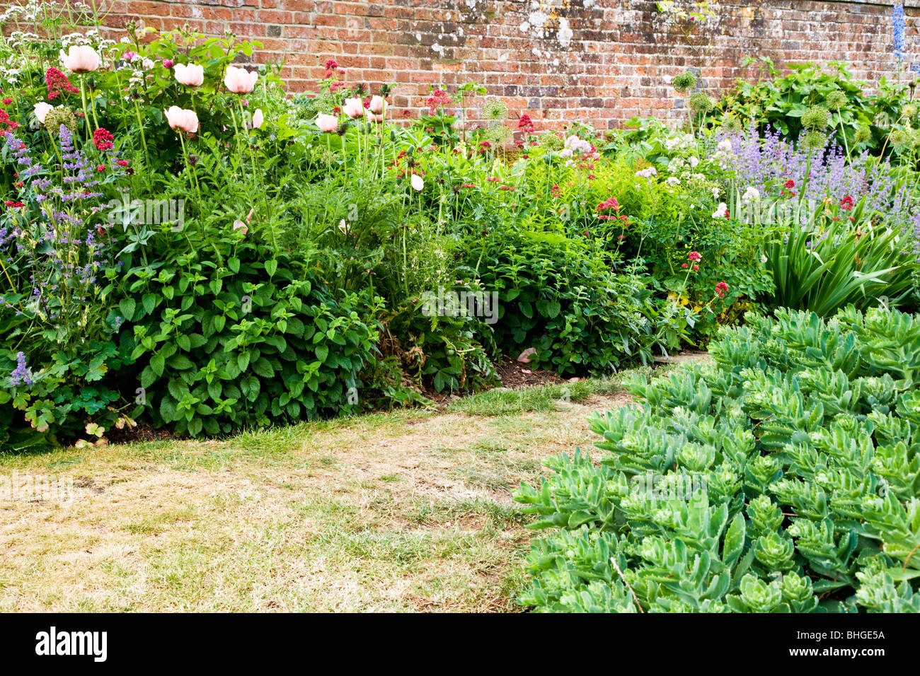 Part of a herbaceous perennial flower border in a walled garden in an English country garden. - Stock Image