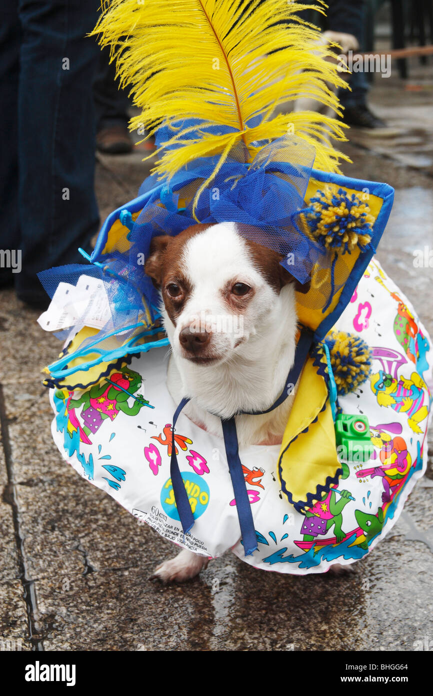 Fancy dress competition for dogs at Las Palmas carnival 2010 on Gran Canaria - Stock Image