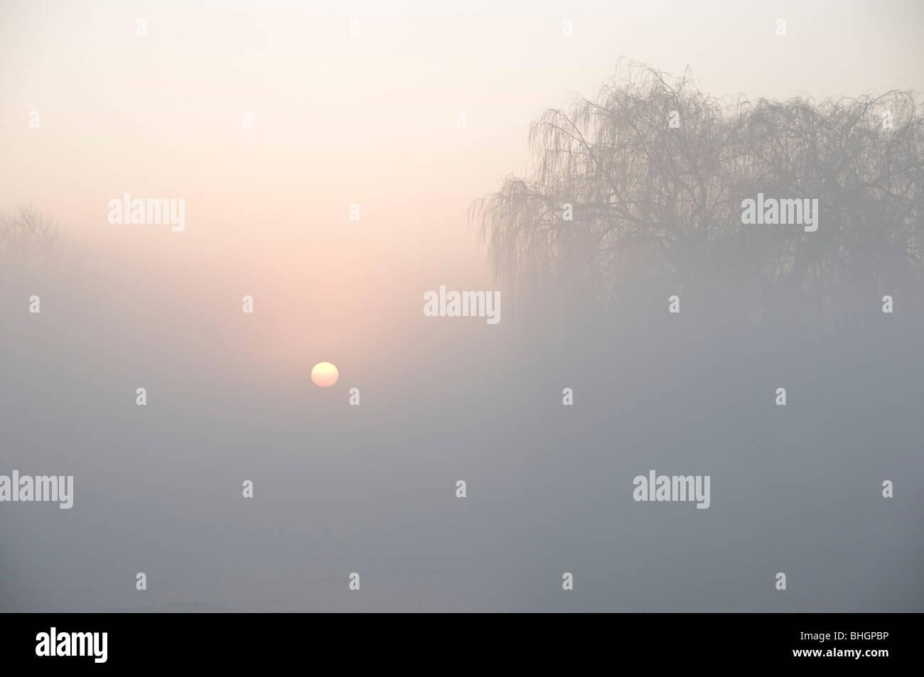 Misty winter sunrise over Leg of Mutton Pond. Bushy Park, London. - Stock Image