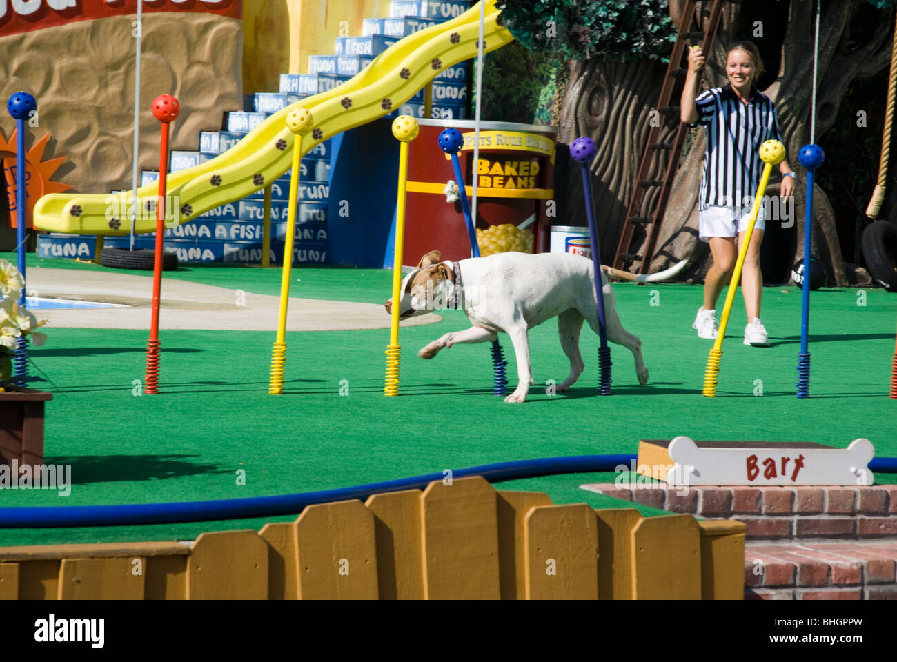 The 'Pets Rule!' show at Sea World in San Diego, California, USA - Stock Image