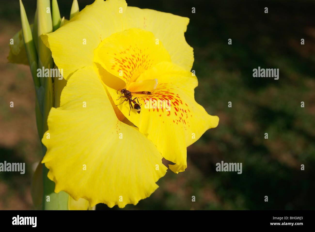 Wild Flowers From Kerala Stock Photos Wild Flowers From Kerala