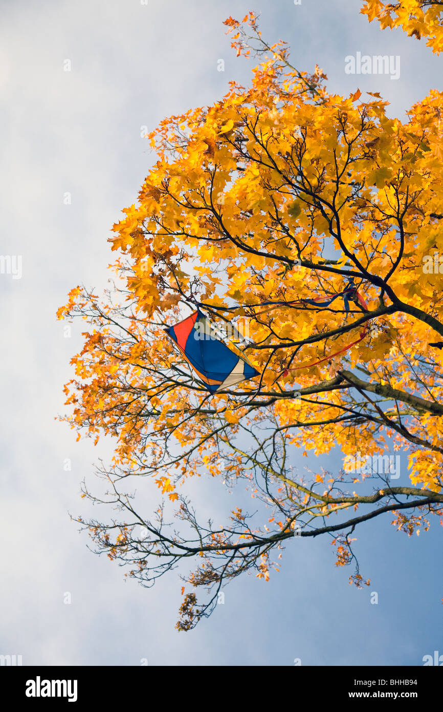 Kite stuck in an autumnal tree, Sweden. Stock Photo