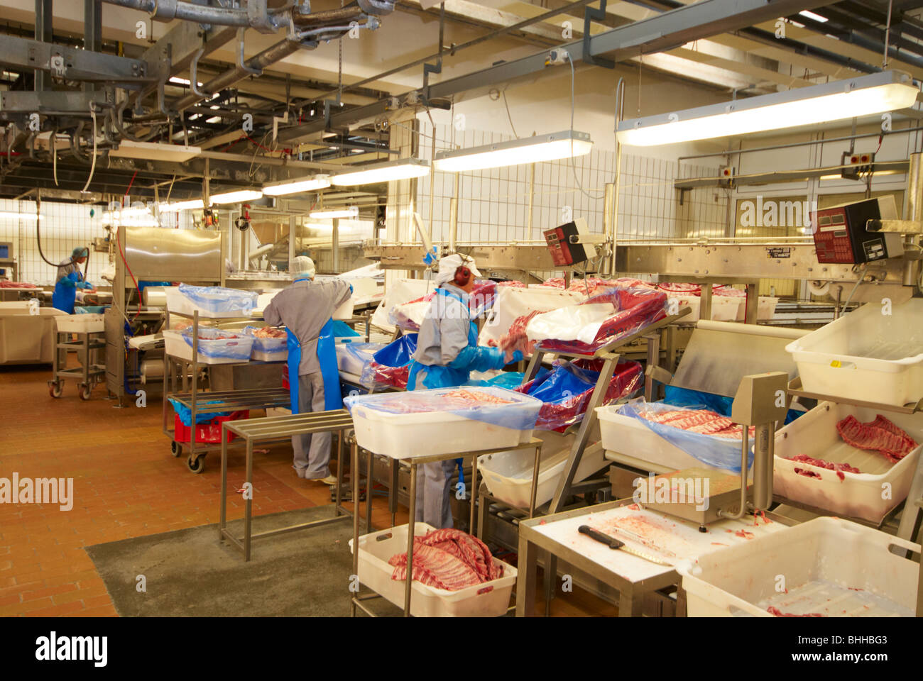 Cutting and pacaking pork for dispatch at pig meat processing plant. Danish slaughter house. - Stock Image