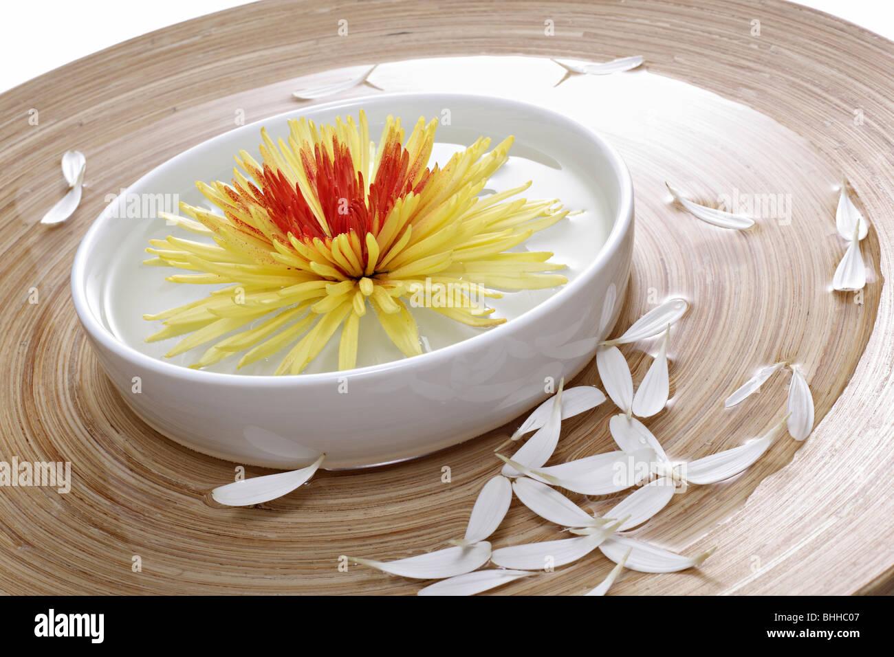 Holzschale und Porzellanschale mit Chrysantheme - Stock Image