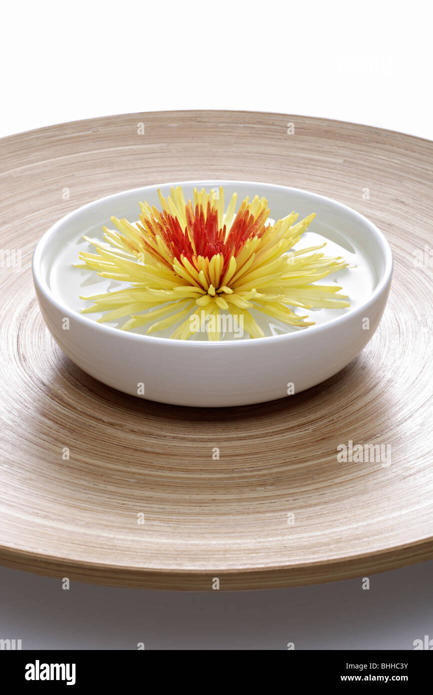 Holzschale und Porzellanschale mit Chrysantheme Stock Photo