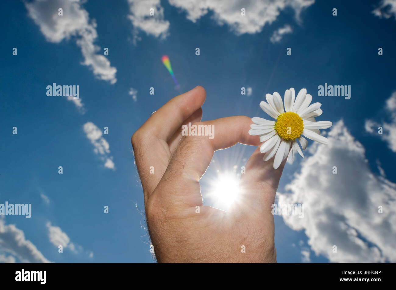 A hand holding a daisy, Sweden. - Stock Image