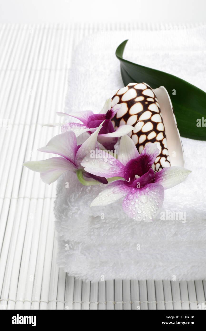 Handtuecher mit Orchidee und Muschel Stock Photo