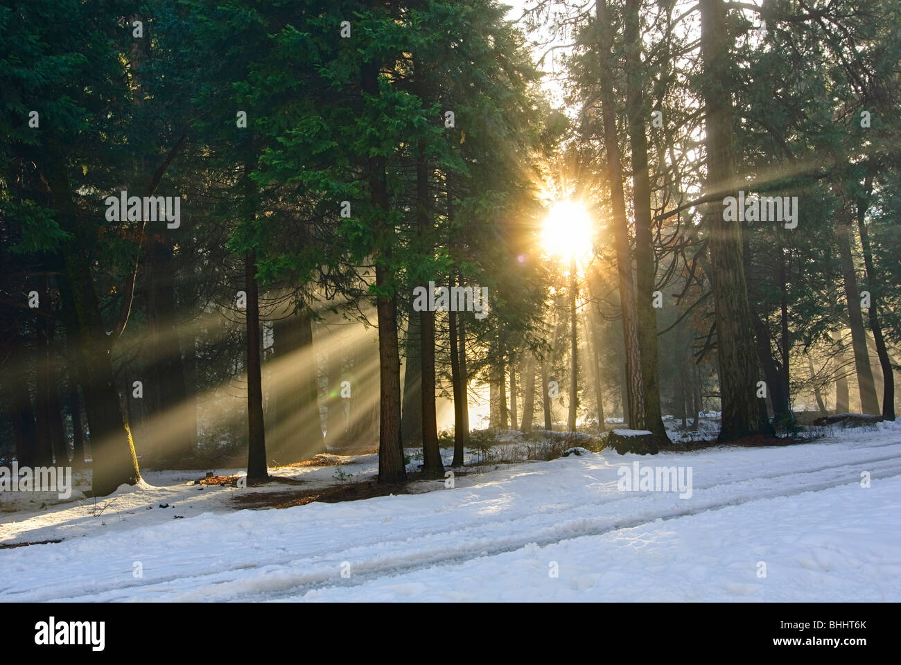 Let there be light. Sun beams pouring through a forest scene. - Stock Image