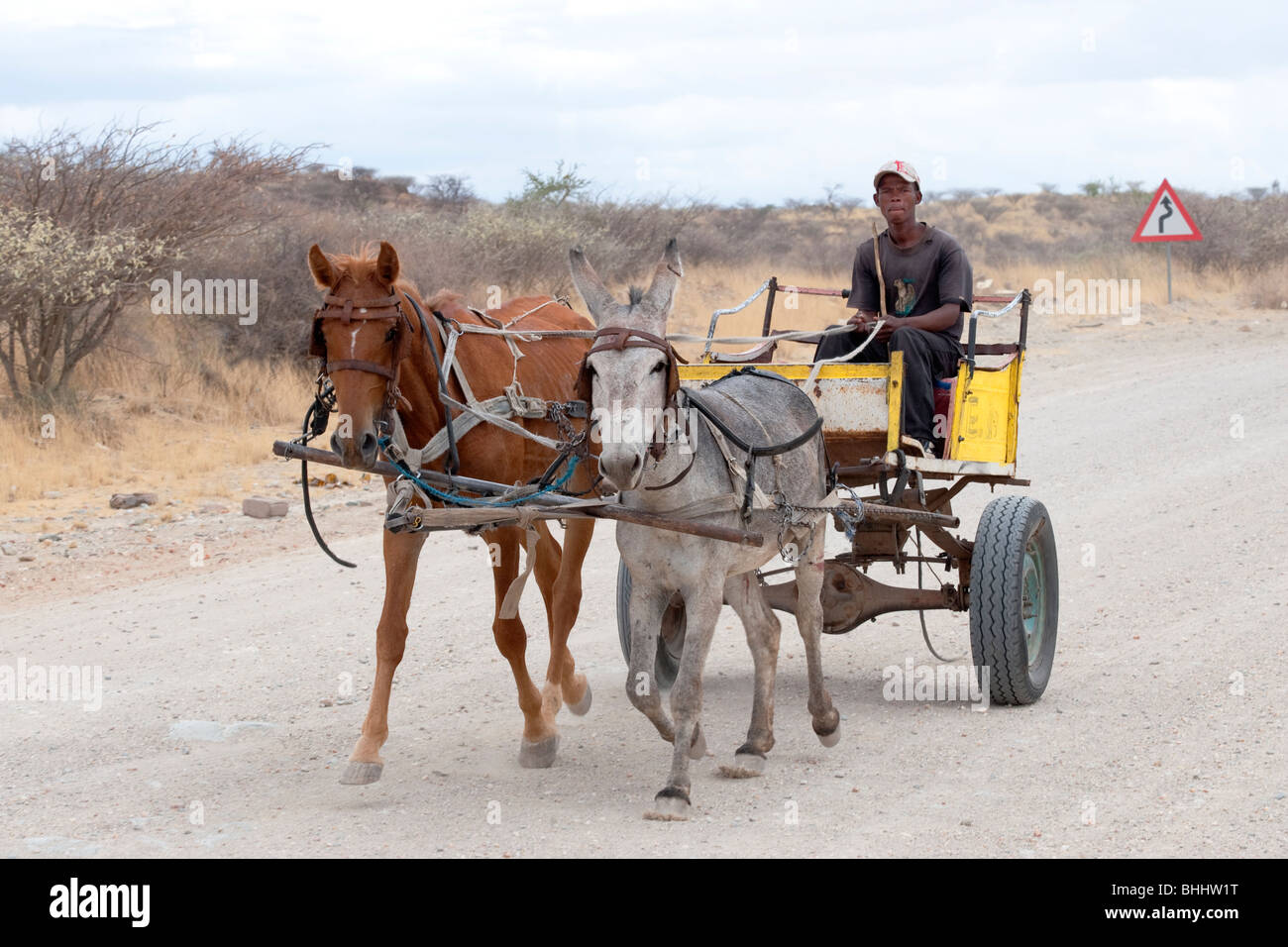 Man on a horse cart in Rehoboth Namibia - Stock Image