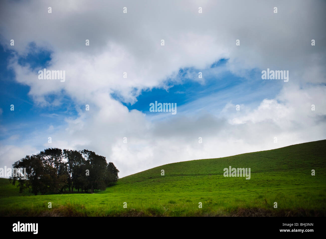 Tree in green hilly field with blue sky - Stock Image