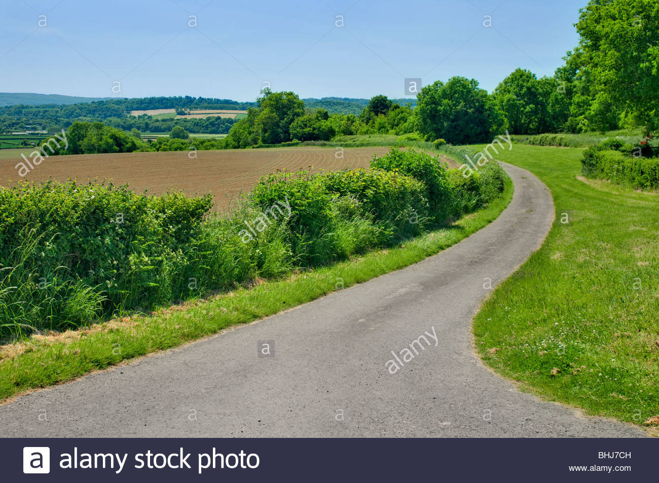 Country lane and hedgerows in summer countryside; Gwent Wales UK - Stock Image