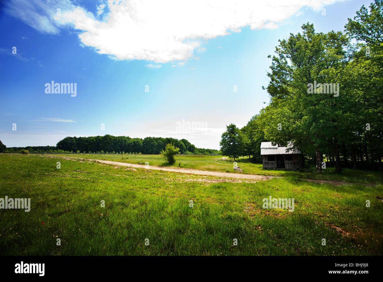 Landscape with forest and grassfield under blue sky - Stock Image