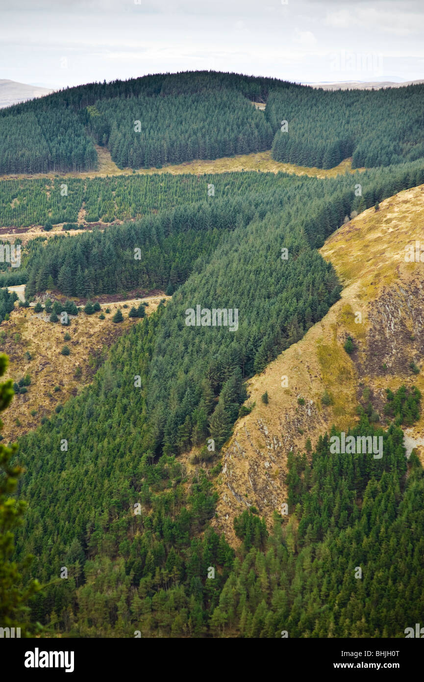 Forestry Commission pine trees plantations and clear felled land, Ceredigion Wales UK - Stock Image