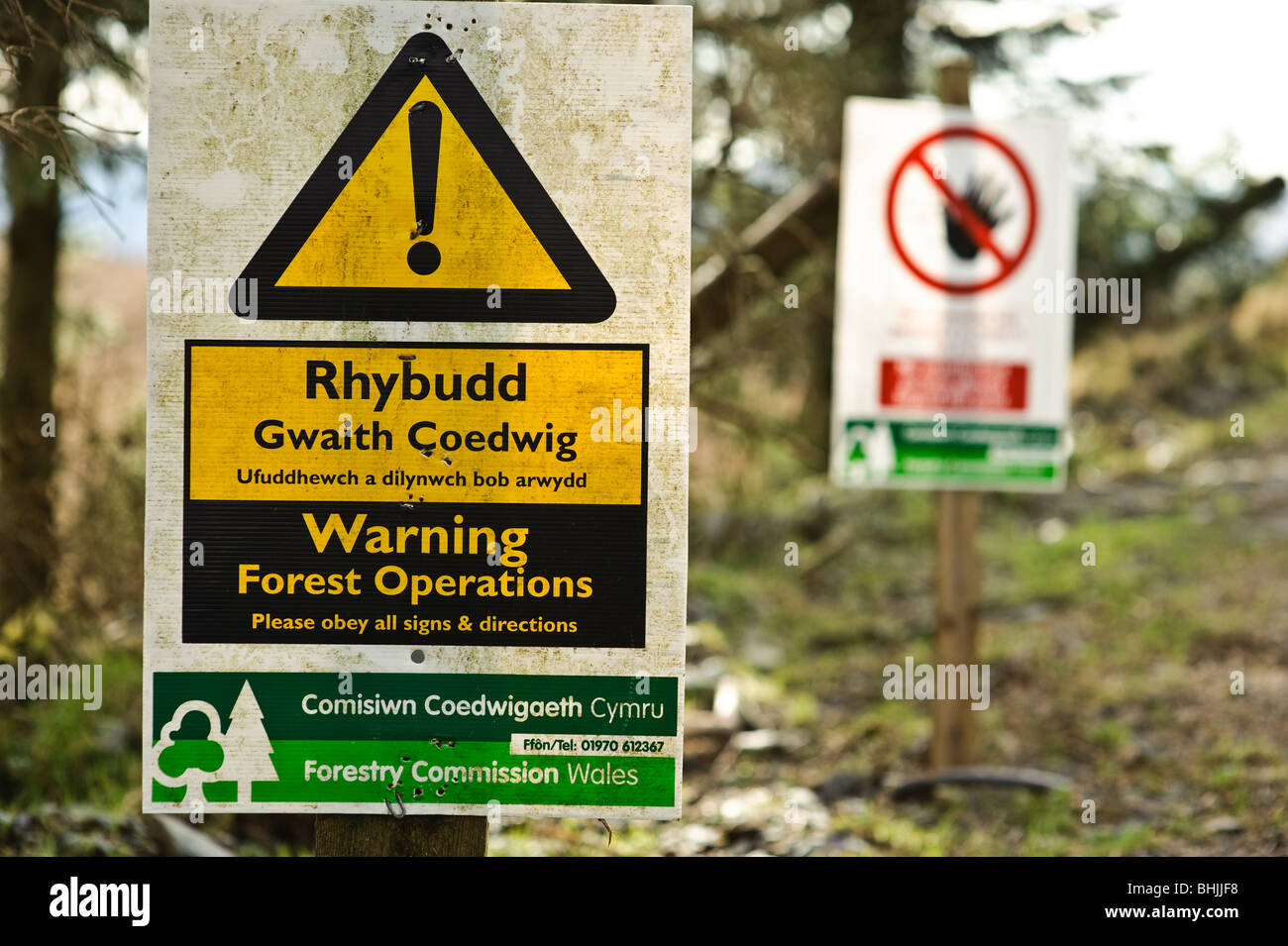 Bilingual Forestry Commission warning sign, woodland clearance and harvesting, Wales UK - Stock Image