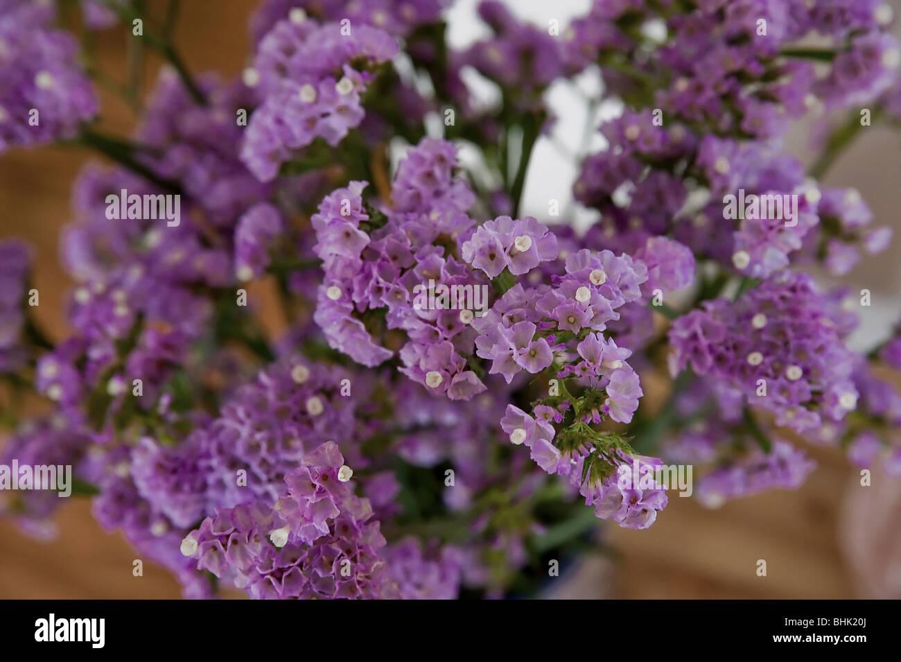Purple flowers close up - Stock Image