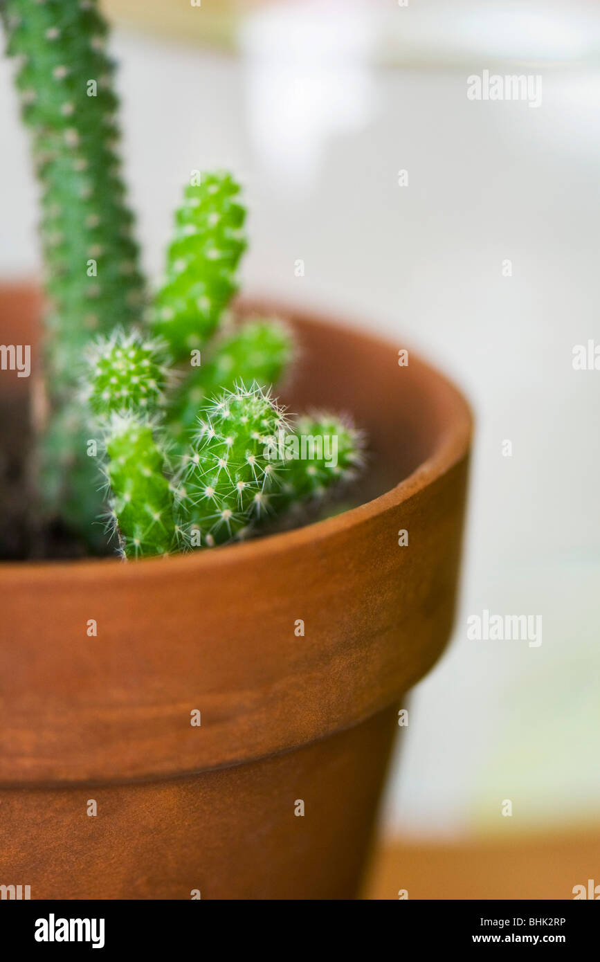 Potted cactus - Stock Image
