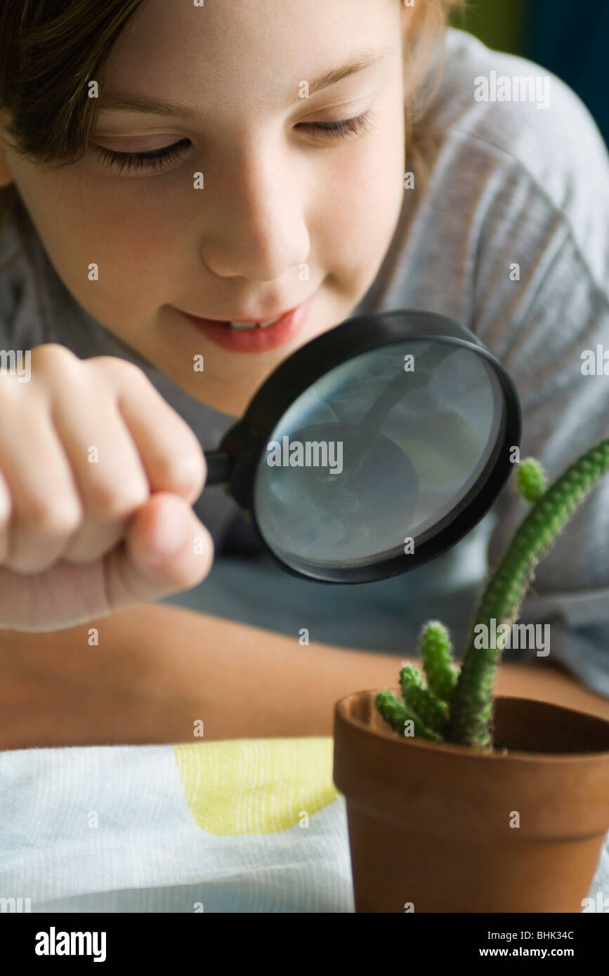 Boy examining cactus through magnifying glass - Stock Image