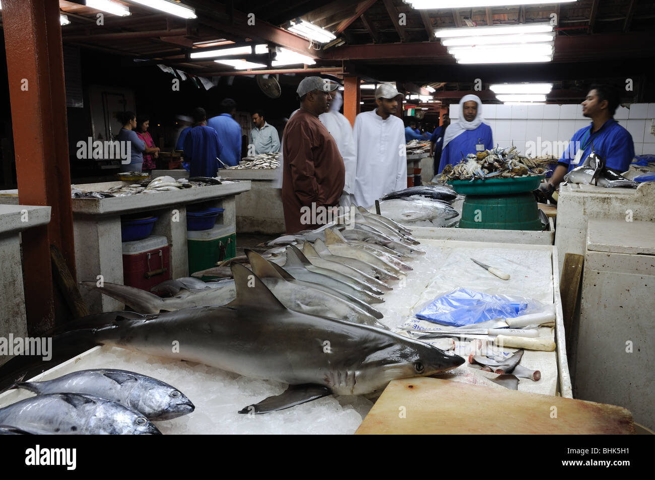 Sharks for sale at fish market in Sharjah, United Arab Emirates - Stock Image