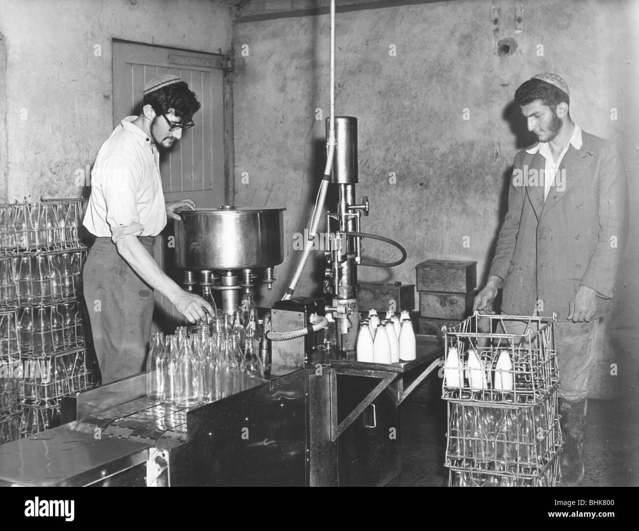 Kosher dairy, (1950?). Artist: EH Emanuel - Stock Image