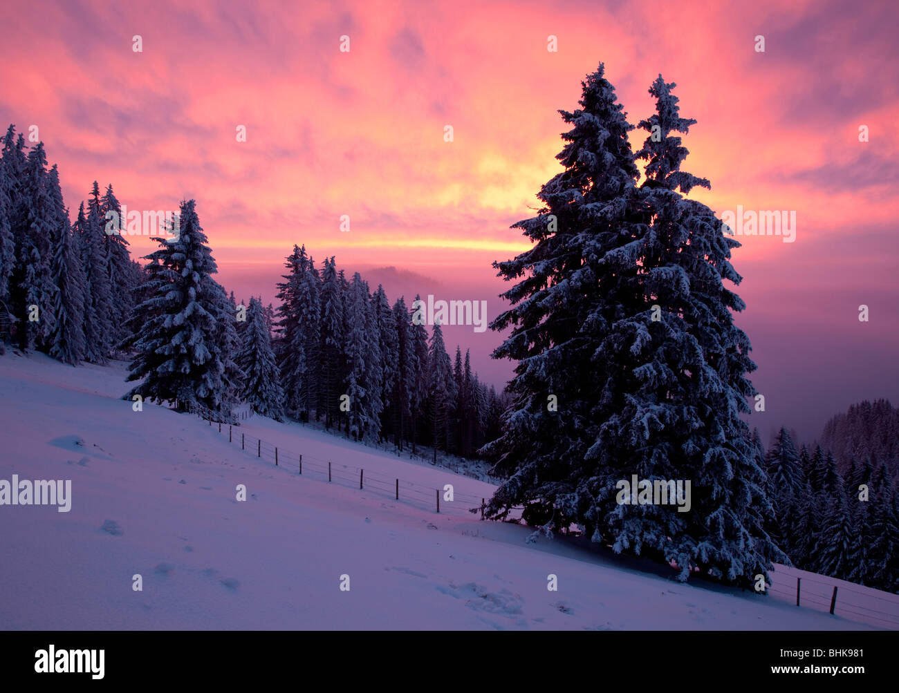 red sky in winter with snow on spruces trees in fog on a mountain pasture - Stock Image