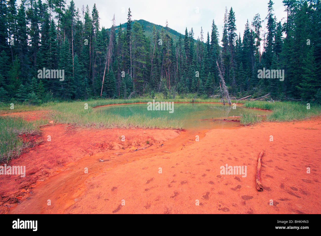 Red Soil at an Ochre Pond, British Columbia, Canada - Stock Image
