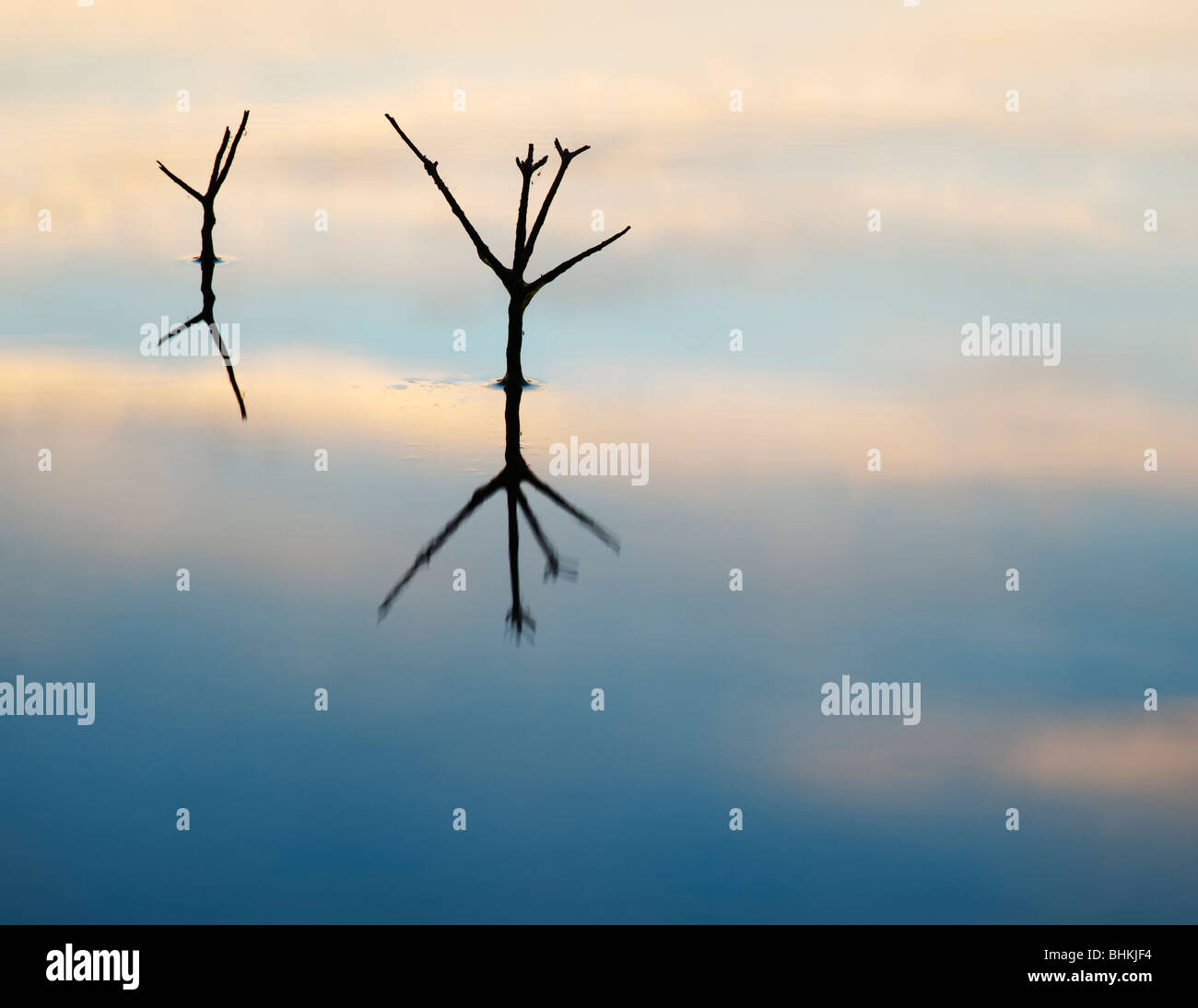 Sticks reflecting in a still pool at dawn in india - Stock Image