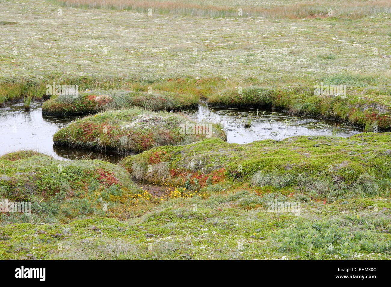 Wetland Scene along the road to Langlade on the Isle of Miquelon (France) - Stock Image