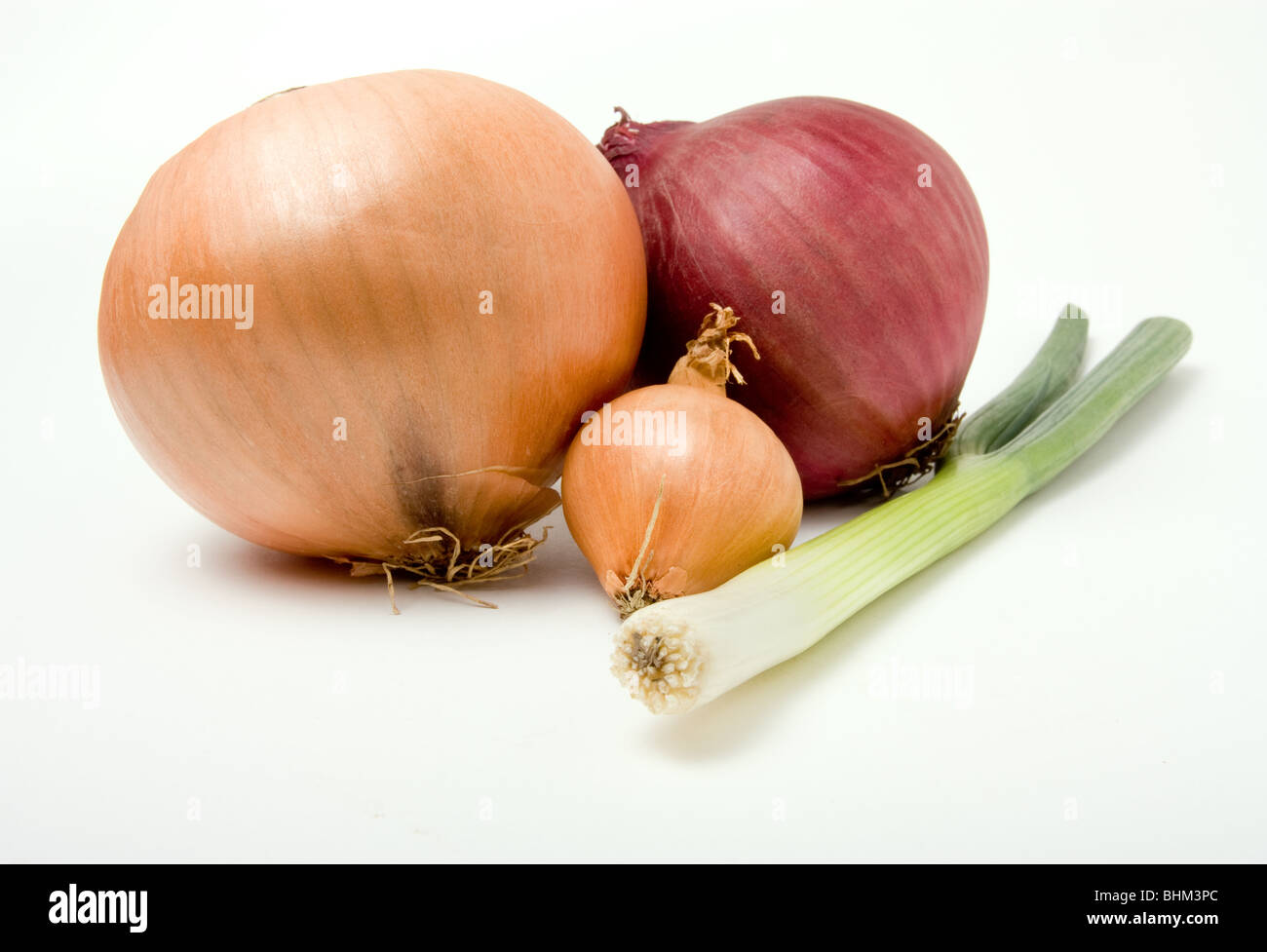 A selection of various onions from the Onion Family isolated against white background. - Stock Image