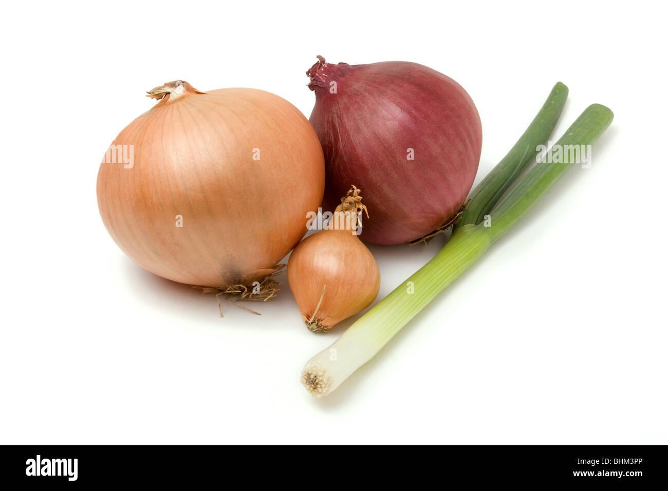 Onion Family Stock Photos Onion Family Stock Images Alamy
