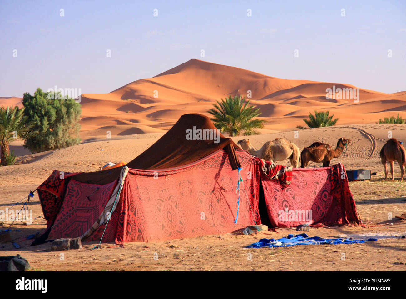 Bedouin tent u0026 camels beneath Erg Chebbi sand dunes in the Sahara Desert near Merzouga Morocco North Africa & Bedouin tent u0026 camels beneath Erg Chebbi sand dunes in the Sahara ...