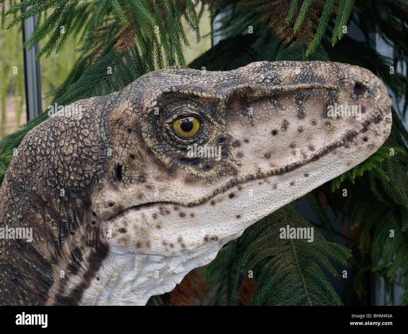 Realistic looking dinosaur model, natural history museum Boxtel, Noord Brabant, the Netherlands - Stock Image