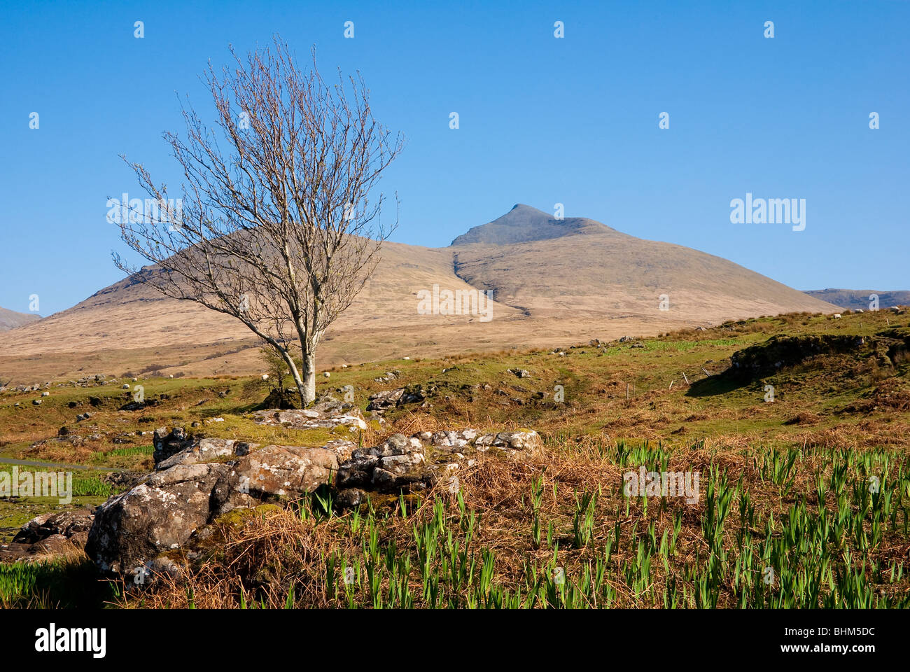 Ben More on the Isle of Mull, Scotland - Stock Image