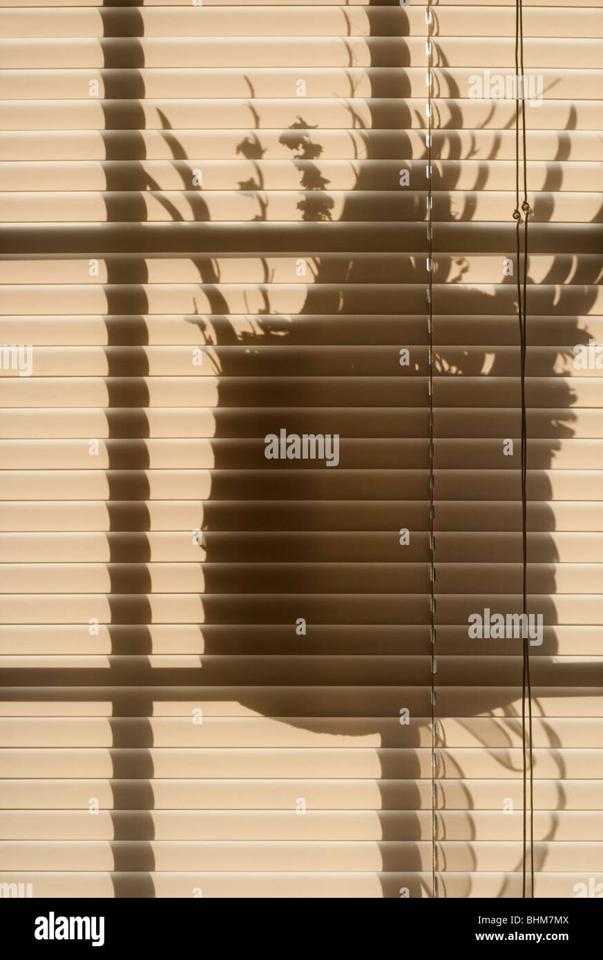 shadow of flowers on blinds - Stock Image