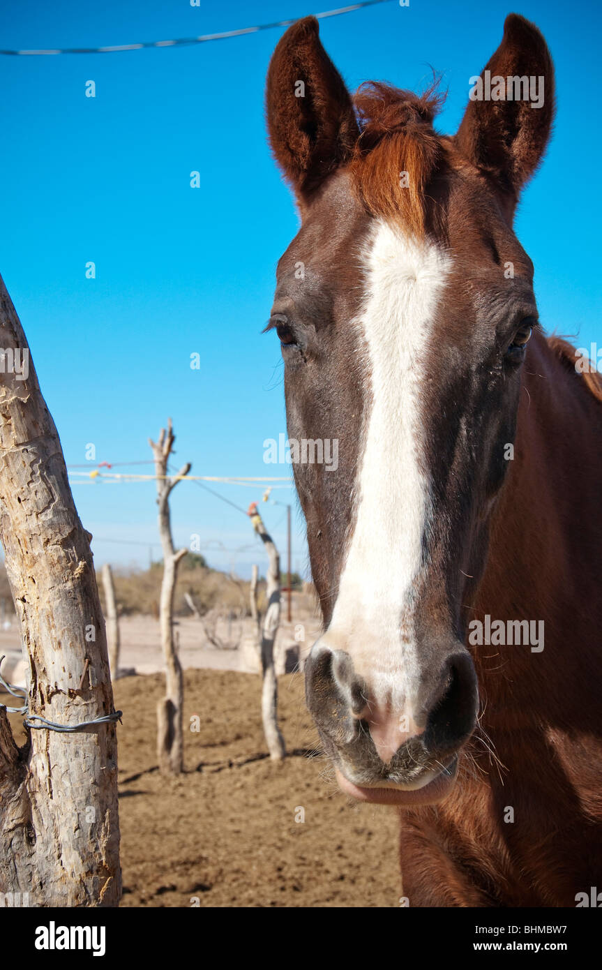 A horse on the GIla Indian Reservation near Phoenix Stock Photo