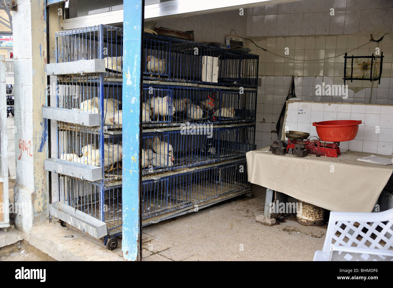 Hens in a cage for sale Madaba,Jordan - Stock Image